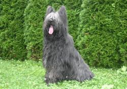 La Tour du Bailly - Pension canine et féline - Elevage de Briard