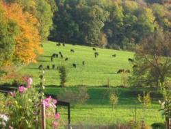 L'élevage Angus Noir de l'Ile Verte