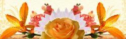 Anthemis fleurs