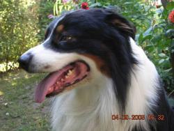 Le Rivage des Mille Etangs - ELEVAGE / PENSION Canine et Féline