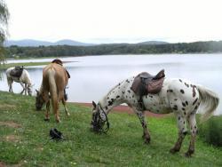 Balades à cheval et à poney