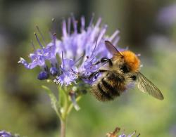 Mon activité: les abeilles
