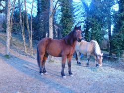 L'écurie de Lyly - Pension pour chevaux