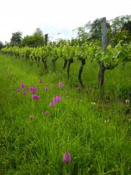 Pascal HENRIOT, vigneron en culture biologique