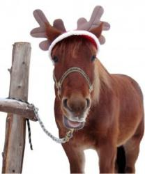 Cheval de Noël