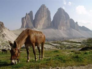 Randonnée avec mule dans les Alpes