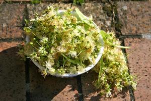 Gelée de fleurs de tilleul